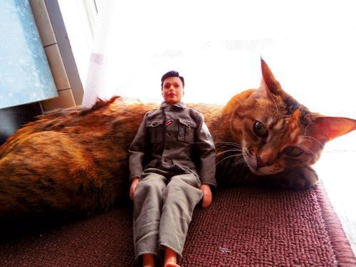 cat sofa2