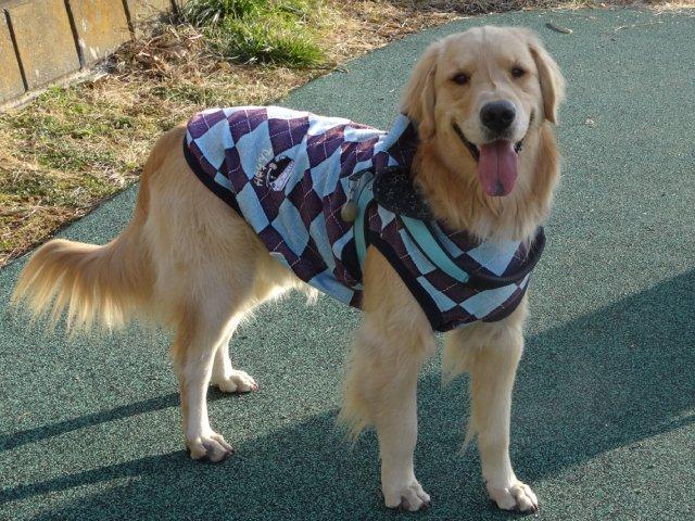 大型犬手作り服 2015-2-7 017