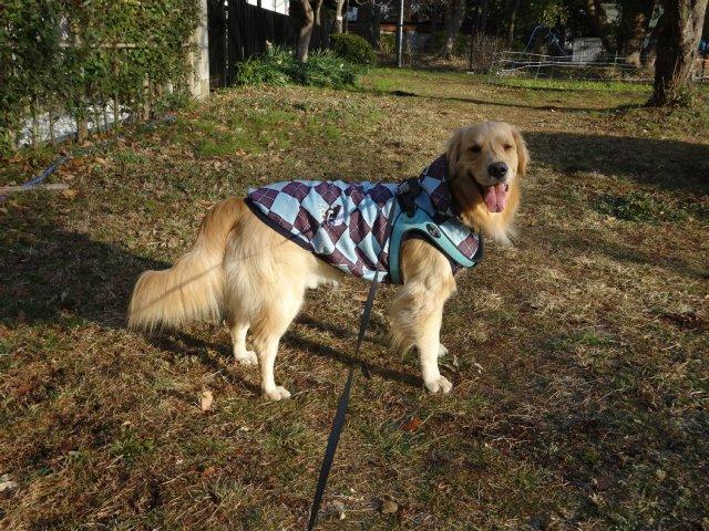 大型犬手作り服 2015-2-7 020