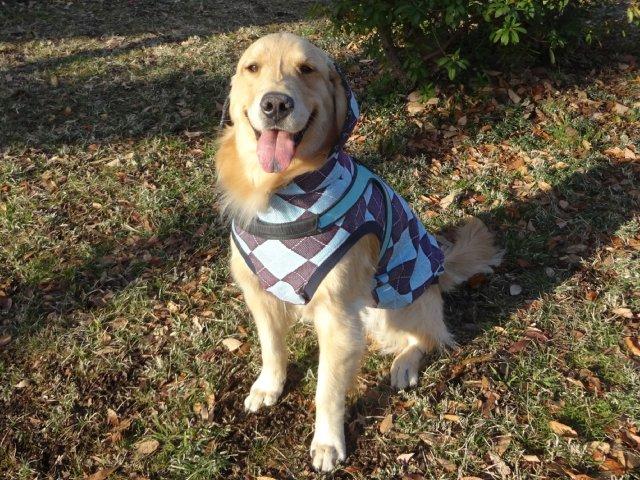 大型犬手作り服 2015-2-7 022
