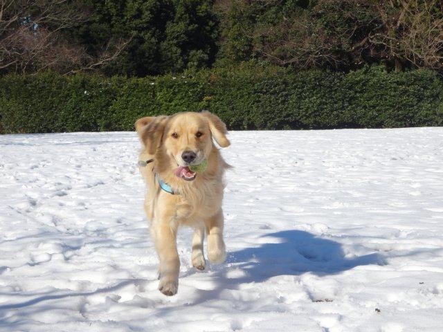 大型犬手作り服 2015-2-7 005