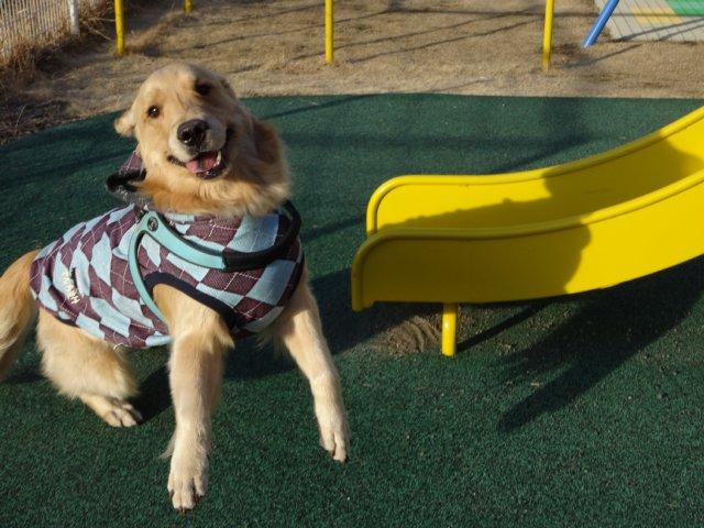 大型犬手作り服 2015-2-7 011