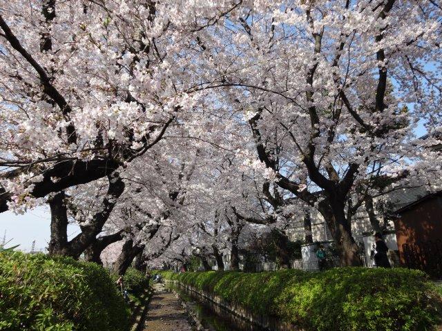 2015.3.30桜 017