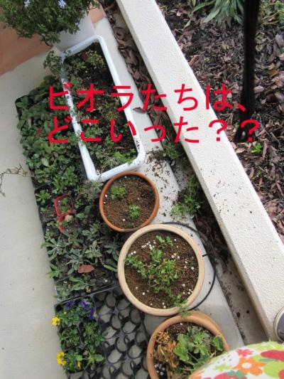 IMG_1294a.jpg