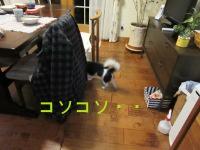 IMG_2045a.jpg