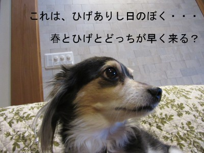 IMG_3051a.jpg