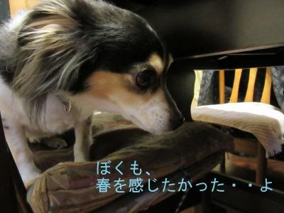 IMG_3239a.jpg