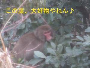 IMG_3301a.jpg