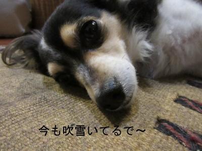 IMG_3424a.jpg