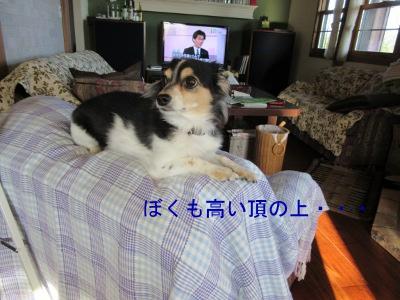 IMG_3976a.jpg