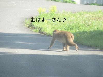 IMG_5280aa.jpg