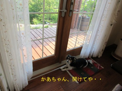 IMG_5358a.jpg