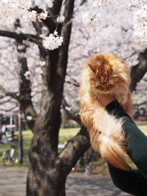フェリちゃんのお花見に行く