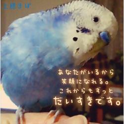 IMG_2904_convert_20150403205515.jpg