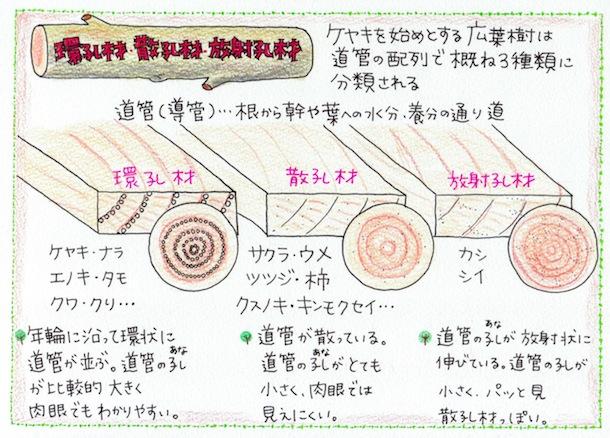 keyaki_5.jpeg