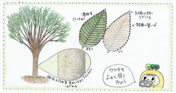 keyaki_cut1m.jpg