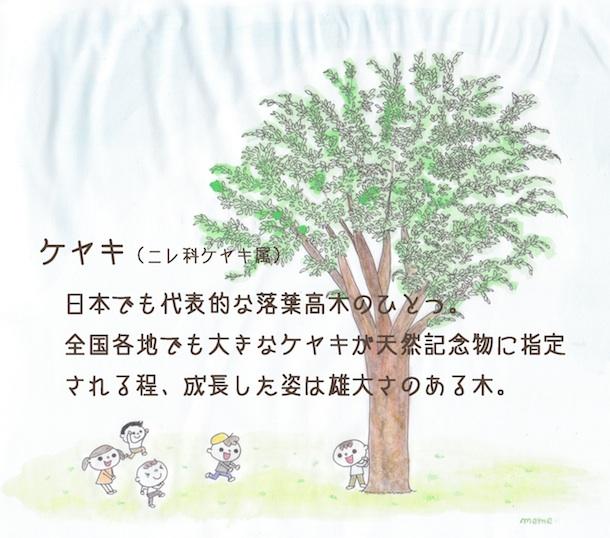 keyaki_cut_m.jpg