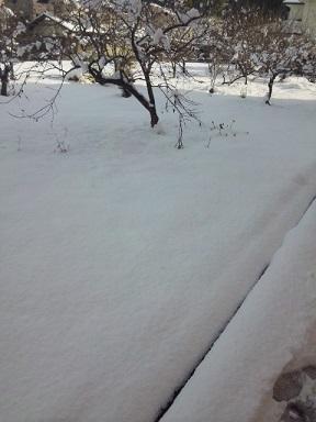 雪景色。。。