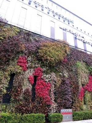 京都ヨドバシ壁面緑化1501