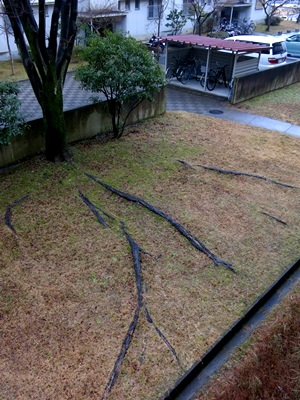 木の根1501