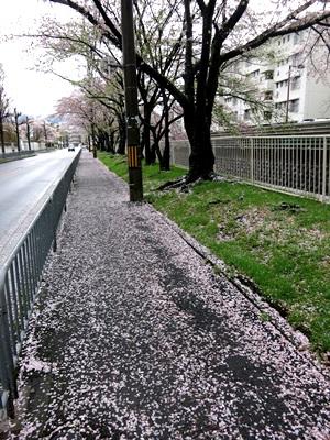 桜散る1504