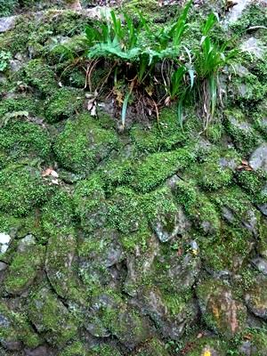 嵐山石垣1505