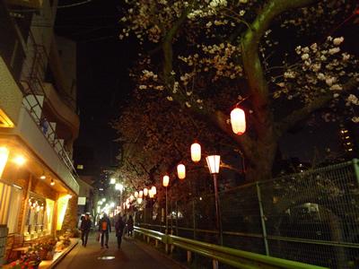 15sakura10.jpg