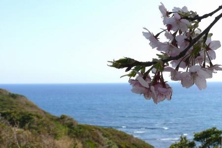 海と桜の景色です
