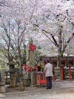 BL150404成田山の桜4#SCF4178