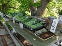 BL150426100円野菜2DSCF4828