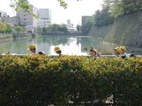 BL150428福井散歩1DSCF4866