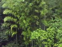 BL150630雨にジョグ2RIMG0037