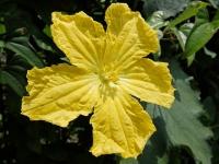 BL150702近所の花1DSCF7277
