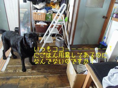 b20150514-DSCN9793.jpg
