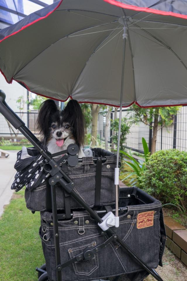 マザーカートに日傘装着!-2