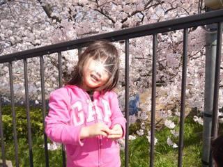 ブログ2 0401桜 (3)
