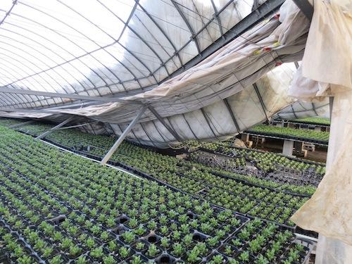 温室の再建