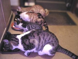 061004_00004外ネコの晩餐VGA