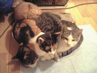 061204_00002夕食後の外猫達VGA