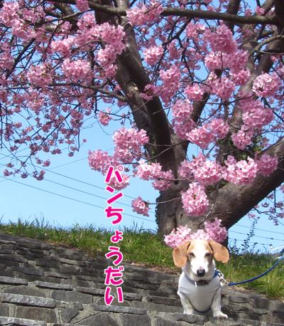 minamiizu6.jpg