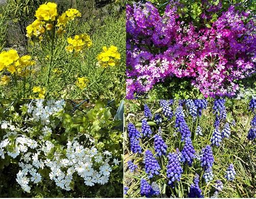 6 公園の花々