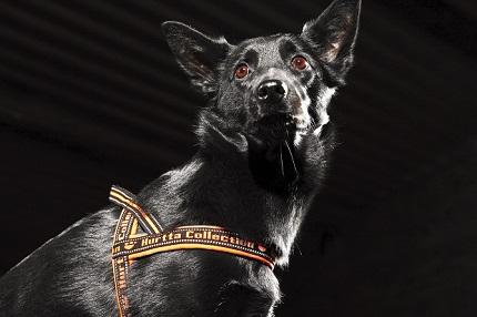 フルッタ蛍光色犬具