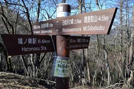 川苔山荘跡分岐の道標