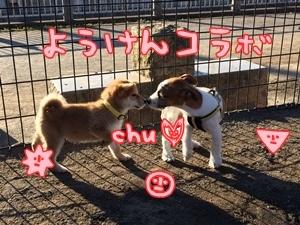 幼犬コラボ