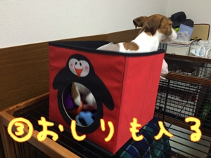 おもちゃ箱⑥