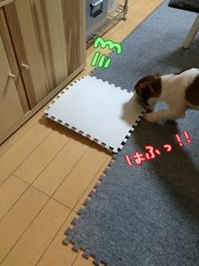 敷きパッド③