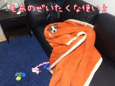 お昼寝コレクション①①