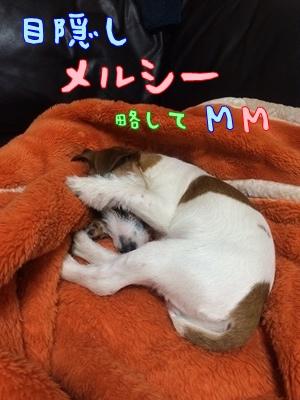 お昼寝コレクション①④