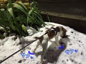 雪と流血③
