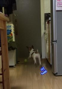 ボール遊び→夜散歩②